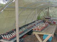 Then line them up in neat rows in the greenhouse