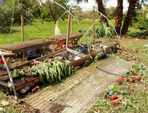 My orchid greenhouse was blown away by Hurricane Charley