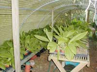 Late in the summer, the greenhouse looks like this